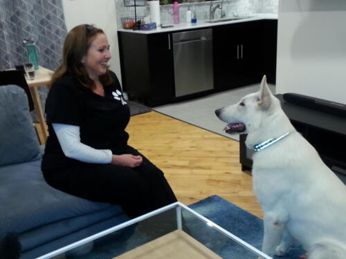 Trained White German Sheppard